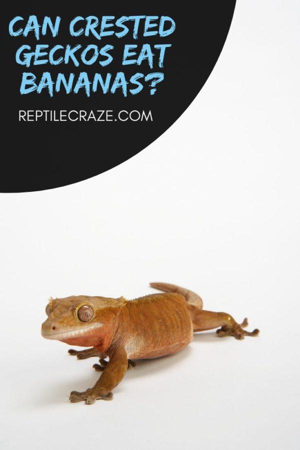 Are bananas okay for crested geckos?