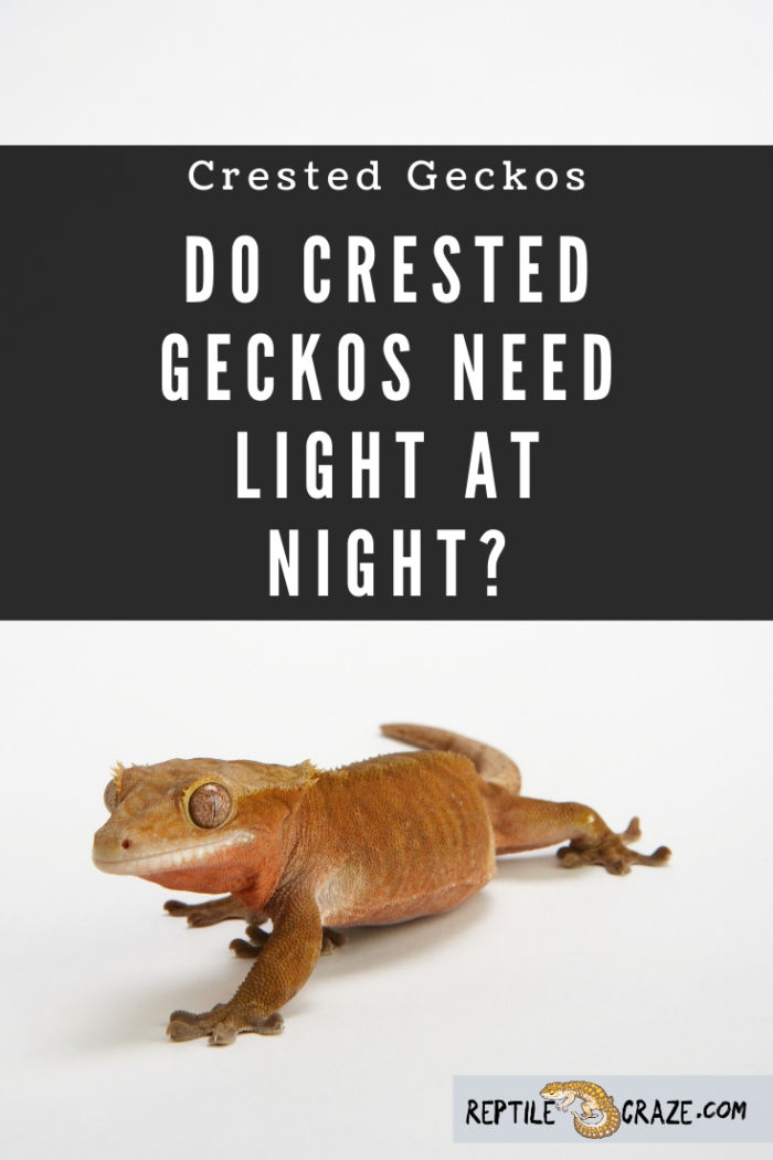 Do crested geckos need light at night?