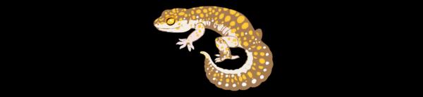Reptile Craze