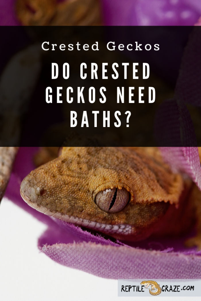 Do crested geckos need baths?