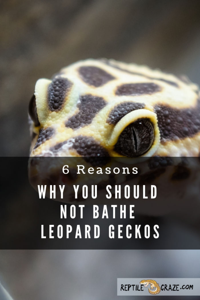 Can I bathe my leopard gecko?