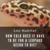 How cold does it have to be for a leopard gecko to die?