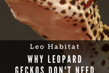 Do leopard geckos need red light?