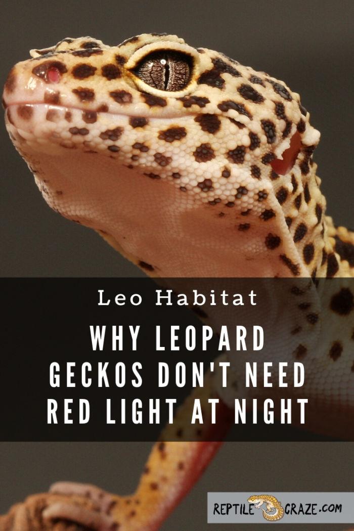 Do leopard geckos need red light?