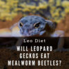 Will leopard geckos eat mealworm beetles?